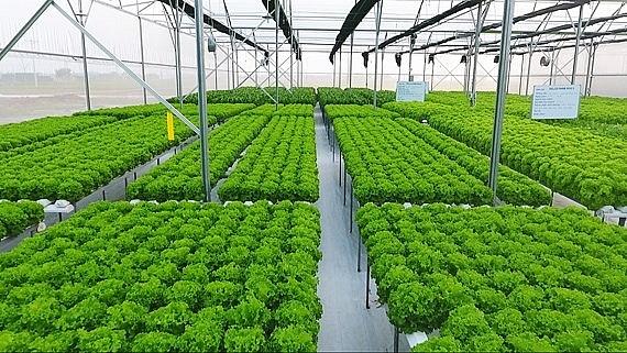 Chọn - lai giống cây trồng bằng khoa học công nghệ cao