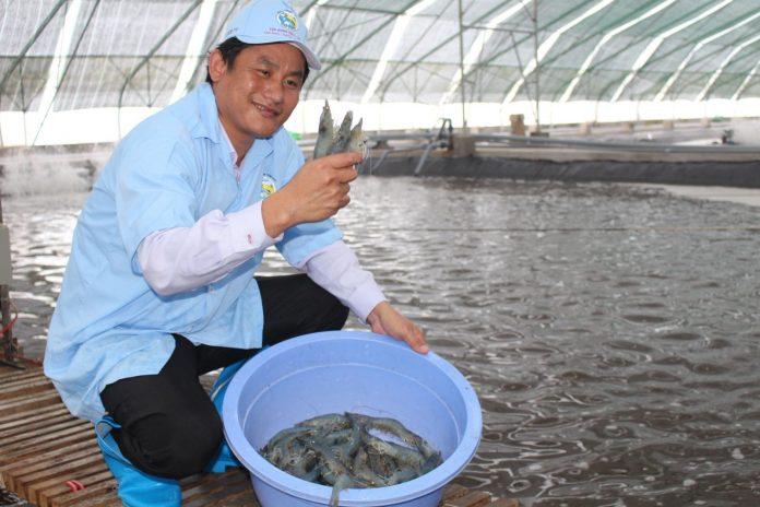 dự án nuôi tôm theo công nghệ xanh