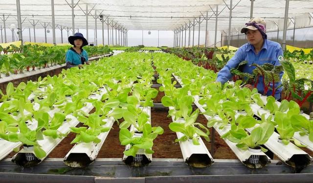 Mô hình trồng rau thủy canh mang đến năng suất và chất lượng cao