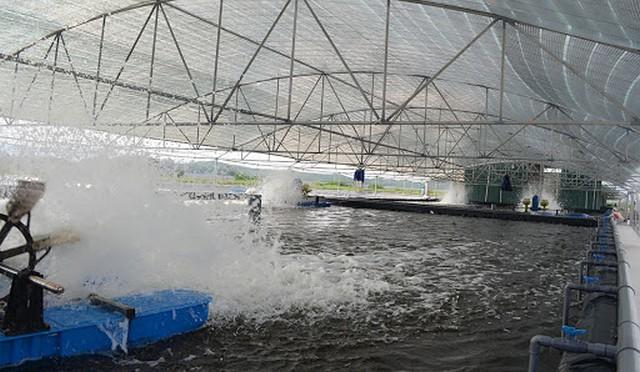 Mô hình nuôi trồng thủy sản công nghệ cao đang dần phổ biến ở nước ta
