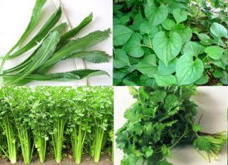 Cách trồng rau gia vị