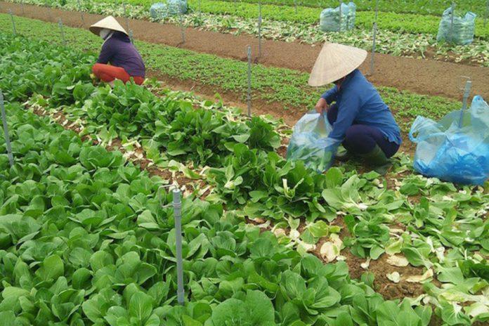 cách trồng rau màu