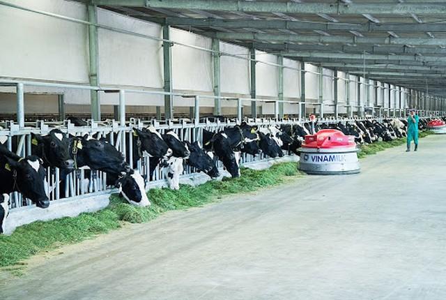 Mô hình chăn nuôi bò sữa theo công nghệ cao của doanh nghiệp Vinamilk