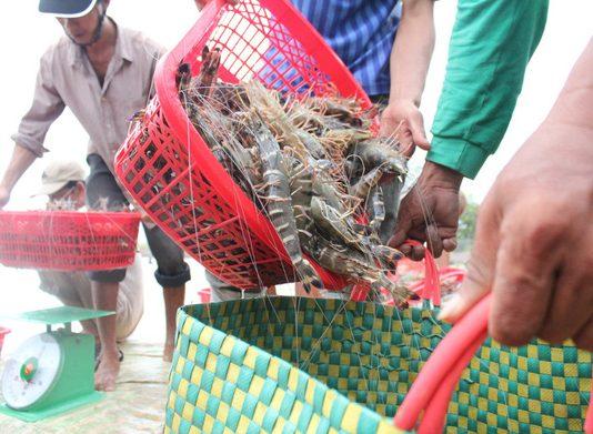 công nghệ mới trong ngành nuôi trồng thủy sản