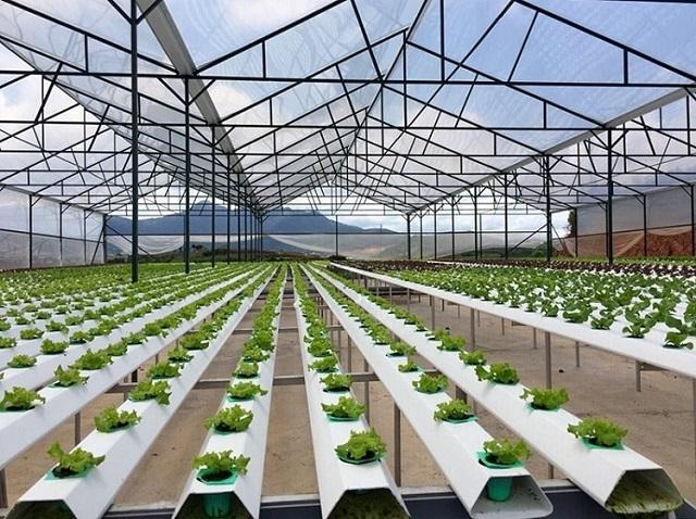 Phương pháp trồng rau thủy canh tĩnh đang được nhiều người ưu tiên ứng dụng