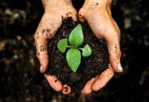 đất hữu cơ