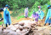 ắc xin Dịch tả lợn châu Phi