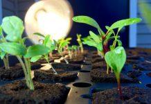 giá thể cho rau trồng thủy canh