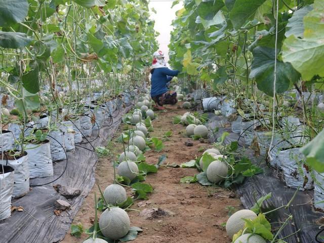 Khởi nghiệp nông nghiệp công nghệ cao có cơ hội kiếm lợi nhuận tiền tỷ hàng năm