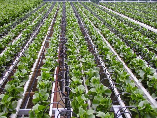 Khởi nghiệp nông nghiệp công nghệ cao cần đối mặt nhiều thách thức