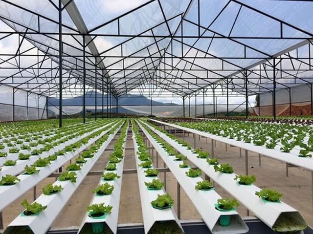 Khởi nghiệp nông nghệ cao sẽ có nhiều cơ hội hơn trong 3 – 5 năm nữa ở nước ta