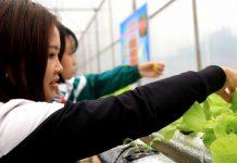 mô hình nông nghiệp công nghệ cao tại trường học