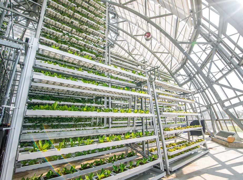Điểm qua các mô hình nông nghiệp công nghệ cao lý tưởng ở nước ta