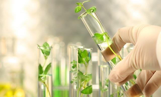 Nông nghiệp công nghệ cao được ứng dụng trong nuôi cấy mô thực vật In Vitro