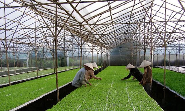 Mô hình trồng rau trong nhà kính từ công nghệ cao Israel ở nước ta