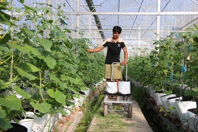 Một mô hình trồng dưa lưới theo công nghệ cao Israel cho sản lượng và chất lượng tăng vọt
