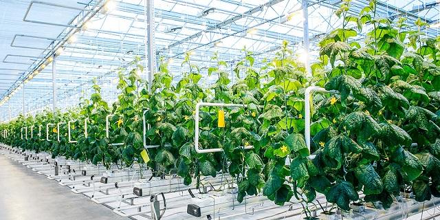 Nông nghiệp công nghệ cao giúp nâng cao hiệu quả kinh tế