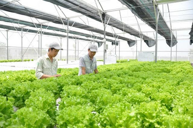 Nông nghiệp công nghệ cao đưa Nhật Bản trở thành đất nước có chất lượng nông sản hàng đầu