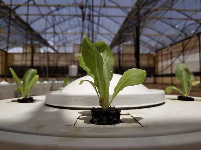 Bạn biết gì về nông nghiệp công nghệ cao trên thế giới?