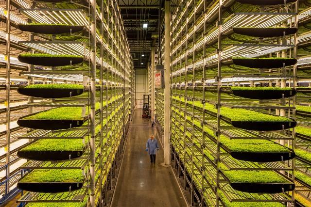 Nông trại thẳng đứng lớn nhất trên thế giới – AeroFarms tại Mỹ