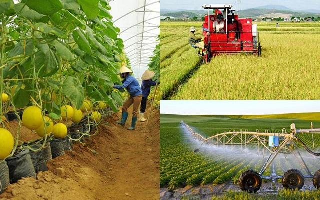 Ngành nông nghiệp công nghệ cao được đánh giá là mang lại nhiều lợi ích