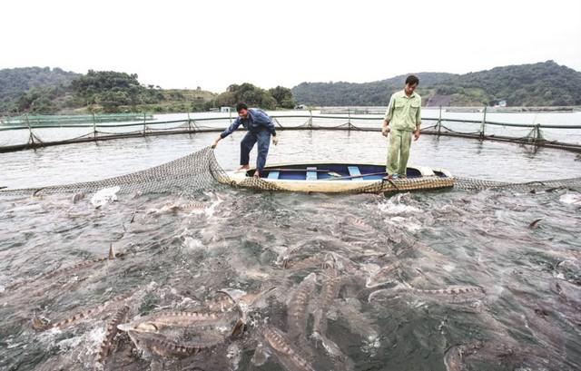 Mô hình nuôi cá công nghệ cao đang được áp dụng phổ biến hơn