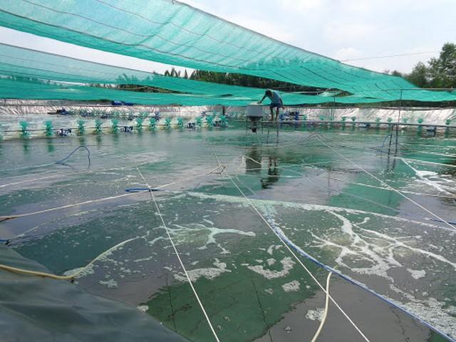"""Mô hình nuôi cá theo công nghệ """"sông trong ao"""" mang đến nhiều ưu điểm lớn"""