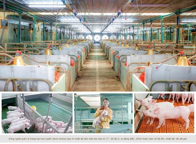 Mô hình trang trại nuôi heo công nghệ cao của công ty tại Nghệ An
