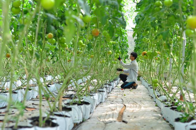nông nghiệp thông minh 4.0