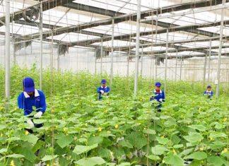 tái cơ cấu ngành nông nghiệp