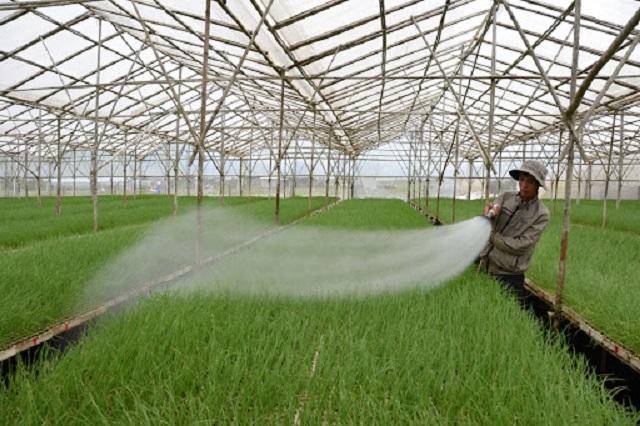 Công nghệ trồng rau Israel có nhiều ưu điểm hơn so với trồng rau truyền thống