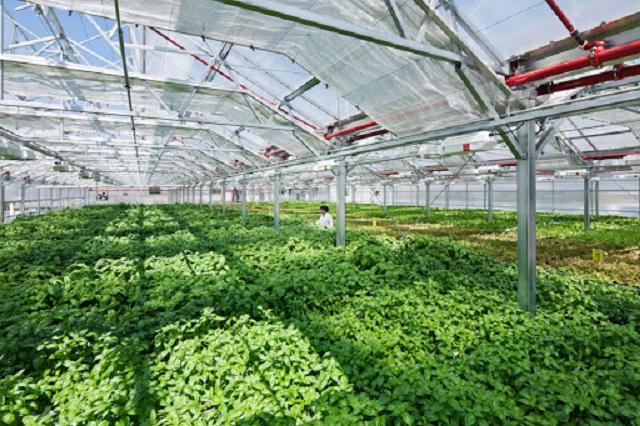 Người quyết định thực hiện trồng rau theo công nghệ Israel cần chuẩn bị sẵn một số vốn