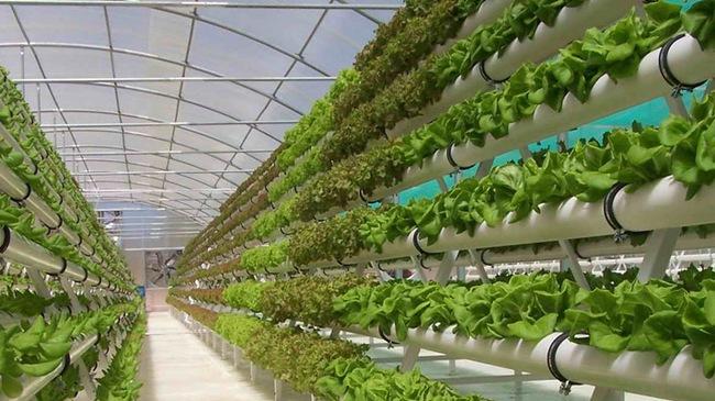 trồng rau màu trong nhà kính