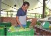 trồng rau sạch theo phương pháp thủy canh