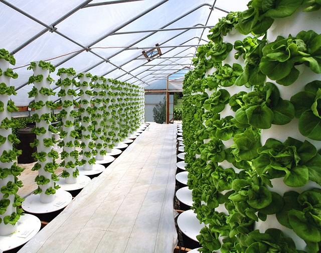 Trồng rau thủy canh ứng dụng nhiều kỹ thuật hiện đại hơn so với trồng rau truyền thống