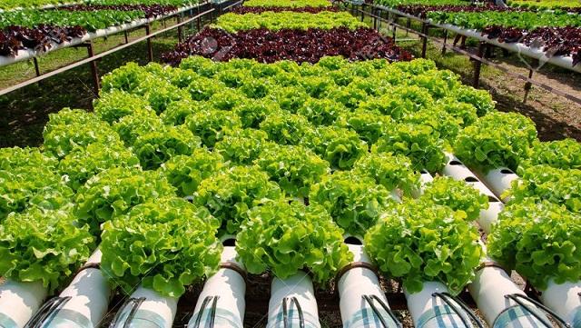 Phương pháp trồng rau có sử dụng nhiều hệ thống tự động