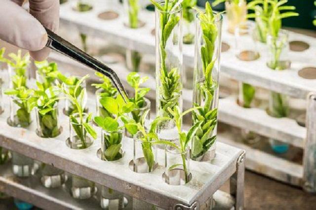 Ứng dụng công nghệ sinh học trong sản xuất nông nghiệp