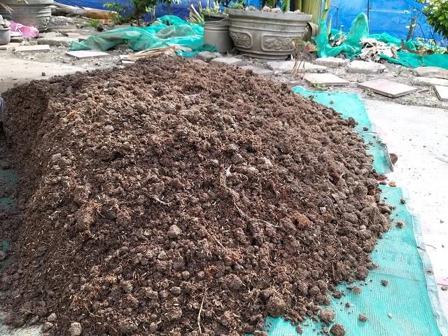 Phân bò chất lượng sẽ chứa nhiều vi sinh vật có lợi và không mang mầm bệnh