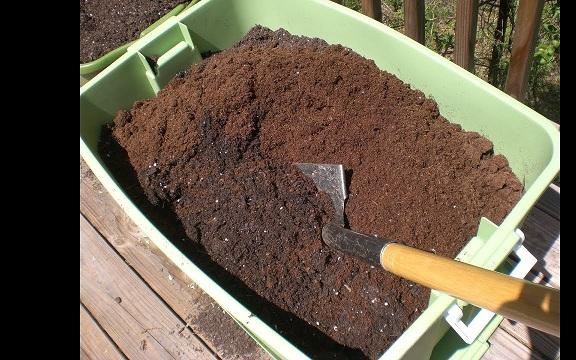 Đất trồng khế phải tơi xốp