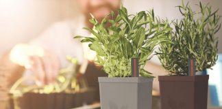 Chậu trồng cây tự tưới hoạt động như thế nào