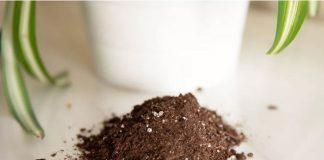 Đất trộn hữu cơ trồng cây nội thất và cây trồng trong chậu 1