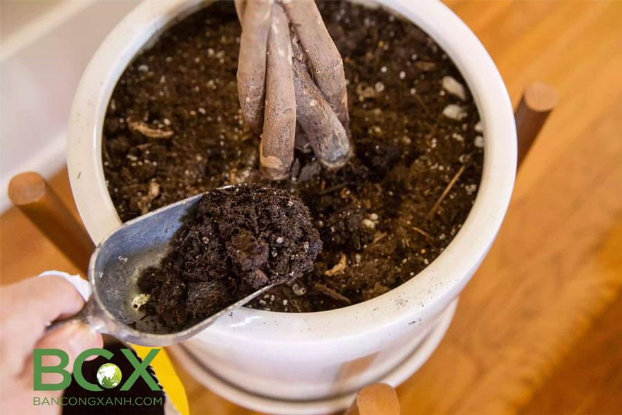 Đất trộn hữu cơ trồng cây nội thất và cây trồng trong chậu 4