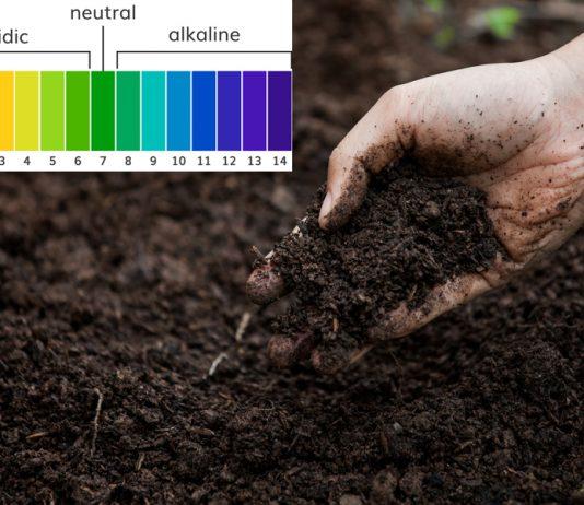 Độ pH của đất là gì và tầm quan trọng của pH đối với cây trồng
