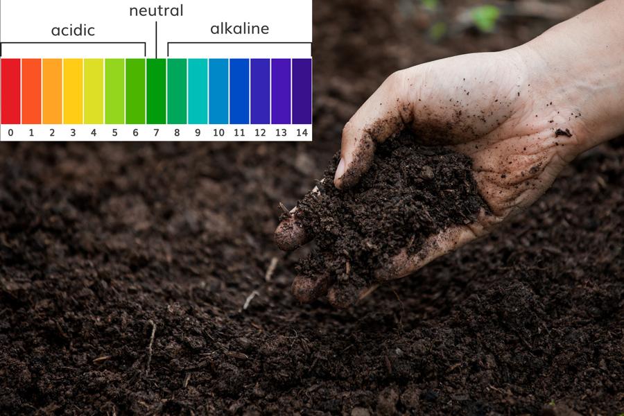 Bạn biết gì về độ pH của đất đối với sự phát triển của cây?