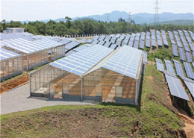 Điện mặt trời nông nghiệp sử dụng trong mục đích canh tác và sản xuất nông sản