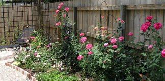 hướng dẫn chuẩn bị bầu đất trồng hoa hồng 2