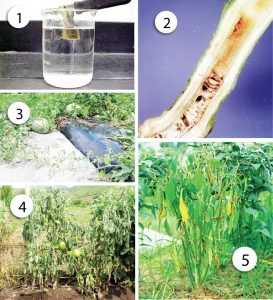 Vi sinh vật gây bệnh cho cây