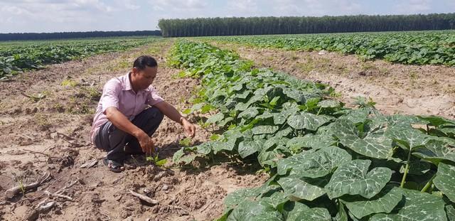 Đất trồng bí đỏ hồ lô cần có hệ thống thoát nước để chống ngập úng cho cây