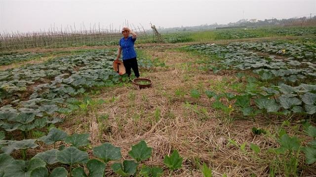 Tùy thuộc vào thời tiết hanh khô hay ẩm ướt mà có thể điều chỉnh lượng nước tưới phù hợp cho cây trồng