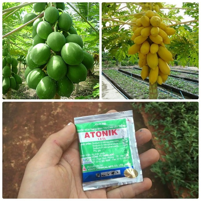 Bạn nên mua thuốc để phòng ngừa sâu bệnh gây hại cho cây